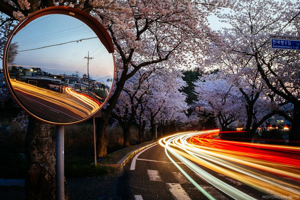 Korea's Roadside Blossoms-1