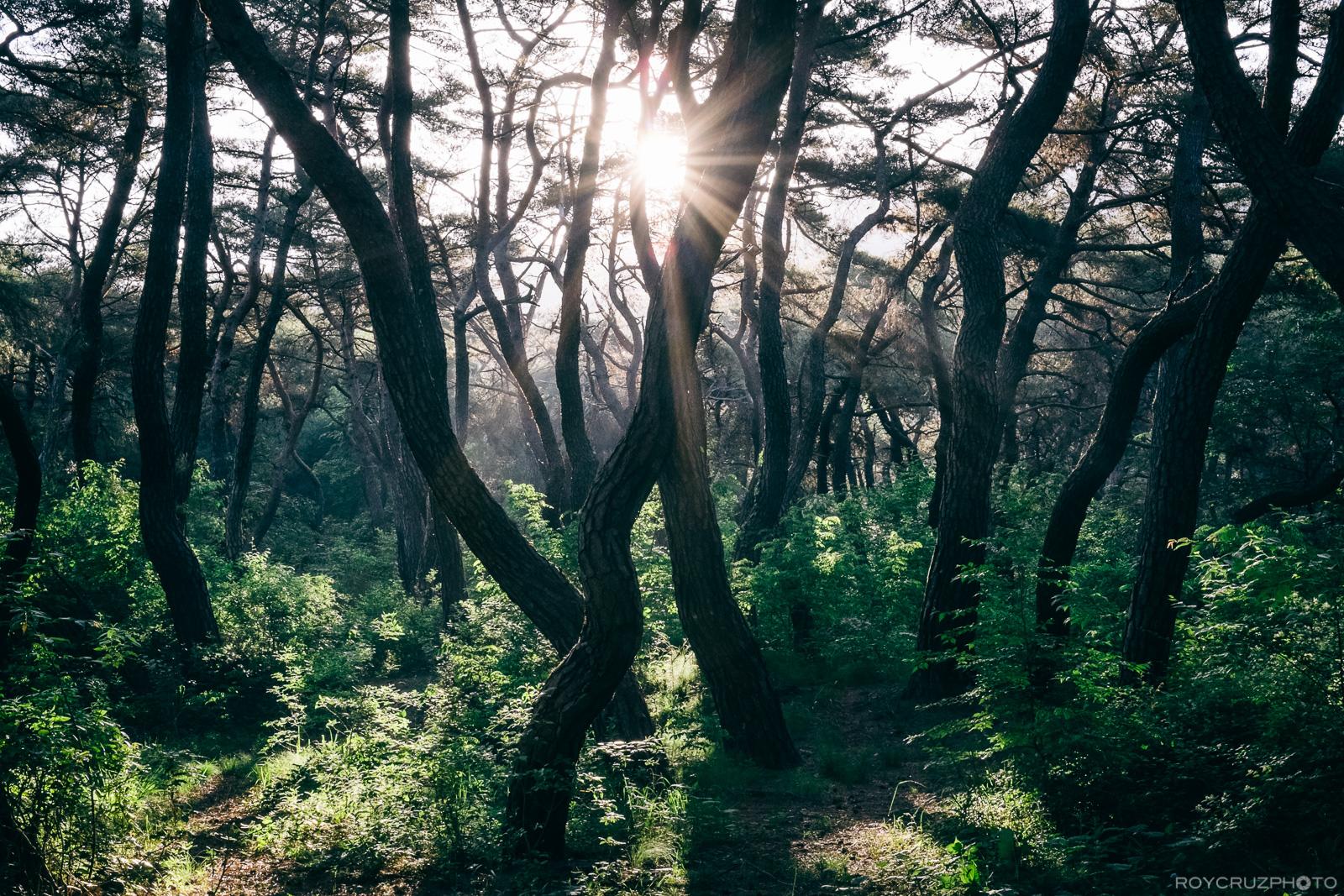 Gyeongju Samneung Forest 경주 삼릉숲