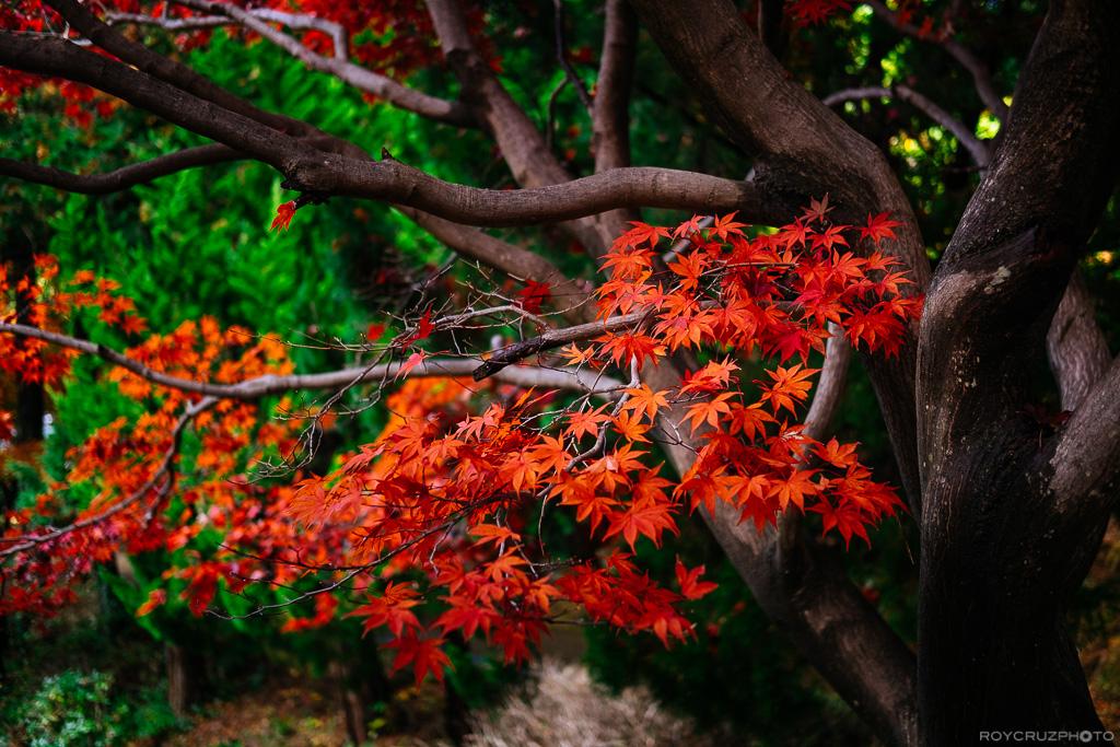autumn-afternoon-on-mireukdo-1