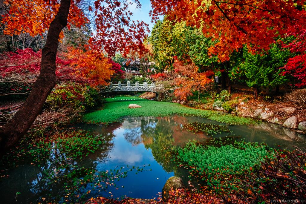 autumn-afternoon-on-mireukdo-2