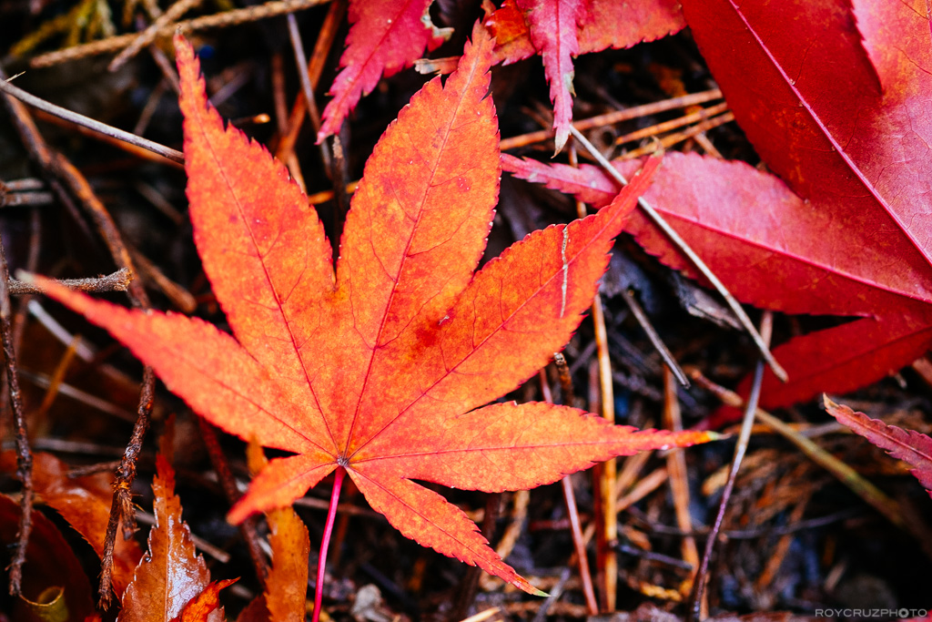 autumn-afternoon-on-mireukdo-3